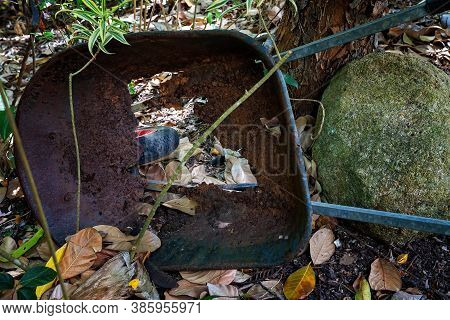 An Old Discarded Wheelbarrow So Rusted That It Has A Hole In The Middle Showing Down To The Tire