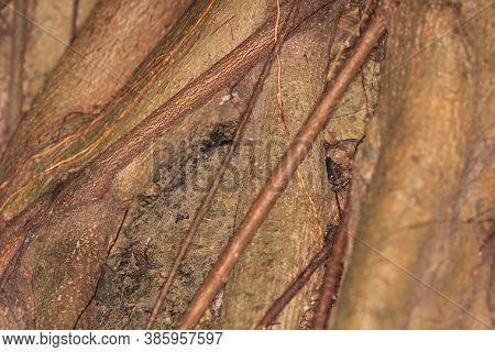 A Tree Bark Texture And Background, Nature Concept