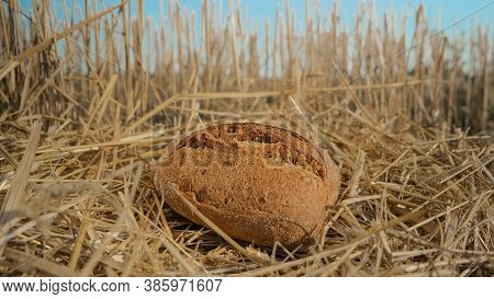 Tasty Bread In Wheat Field. Homemade Baking Concept. Fresh Baked Bread On Hay Background. Wheat Loaf