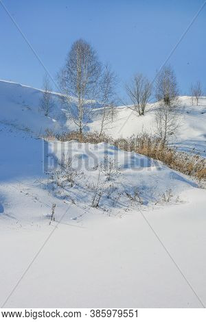 Beautiful Winter Landscape With Birch Tree On The Hill