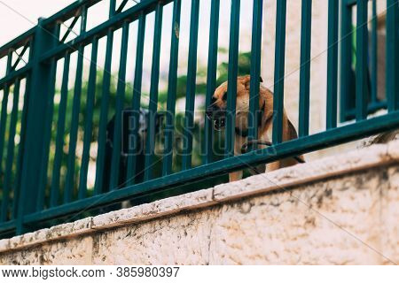Two Dogs Behind The Fence, Guard A Section Of The House, Bark At Passers-by. Brown And Black Dogs. P