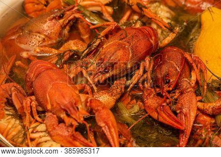 Cooking Freshwater Crayfish In A Pan. Crayfish Boil In Boiling Water, Close-up. Cooking Crayfish In