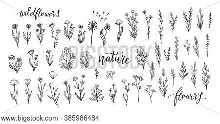 Wildflower Line Art Set. Flower Doodle Botanical Collection. Herbal And Meadow Plants, Grass. Vector