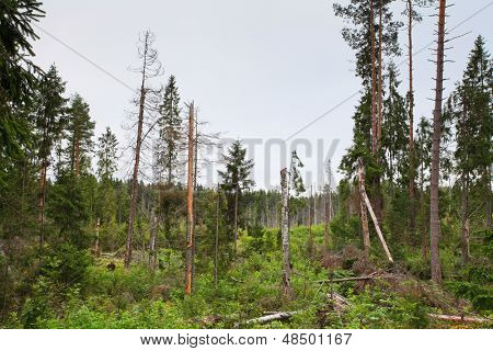 Landscape with the image of windfall on a bog