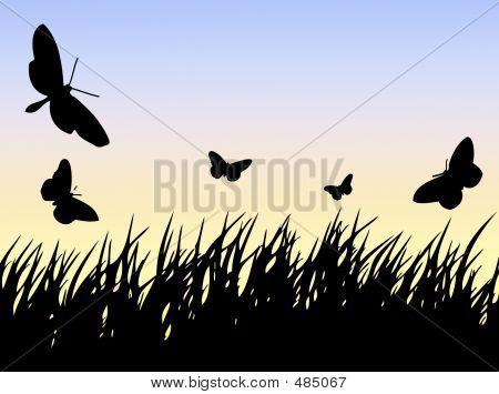 Butterflies N Grass