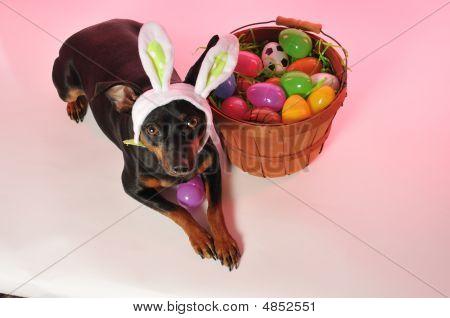 Easter Bunny Doggie