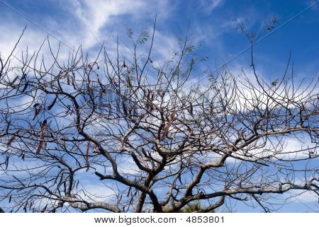 Bare Tree And Sky