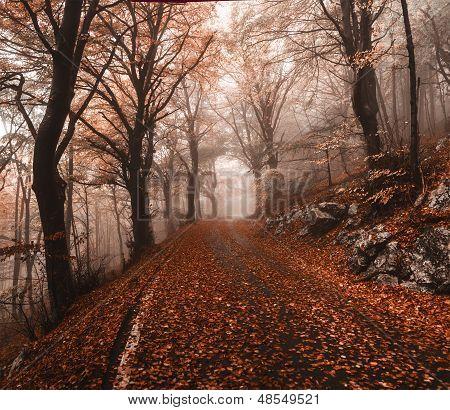 Autumn in the regional park of Campo di Fiori Varese poster