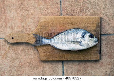 Dourada Fish