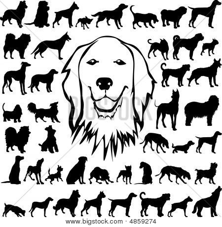 Detailed Vectoral Dog Silhouettes