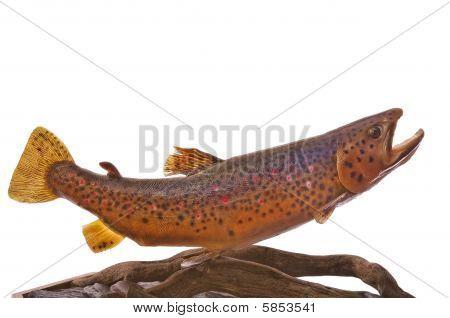 German Brown Trout