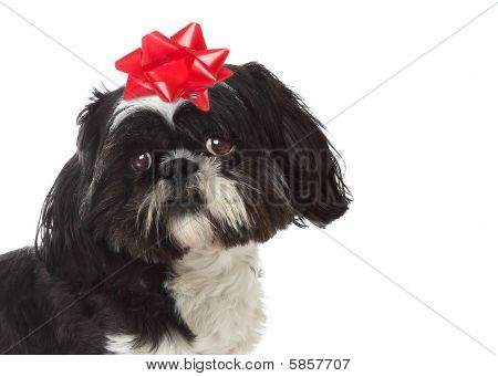 Special Gift Puppy