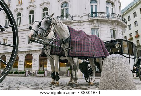 Vienna, Austria, A Pair Of Horses Harnessed To A Carriage.