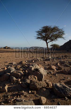 Dry Desert And Tree