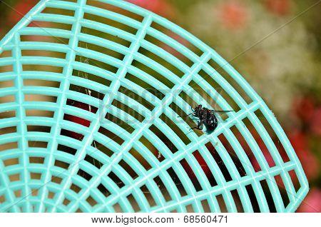 Dead fly on a flyswatter