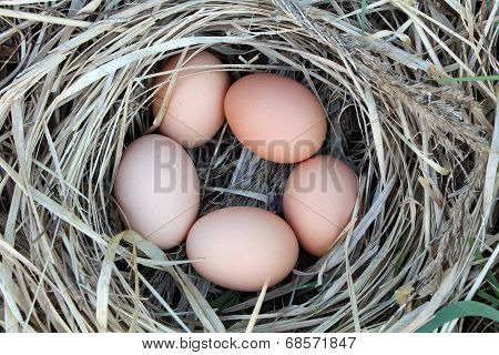 Chicken eggs in a arranging nest - Easter composition