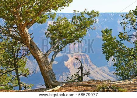 Edge Of The Grand Canyon