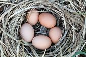 Photo of chicken eggs in a arranging nest - Easter composition poster
