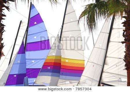 hoby hobby cat colorful sails palm tree leaf summer sport vacation poster