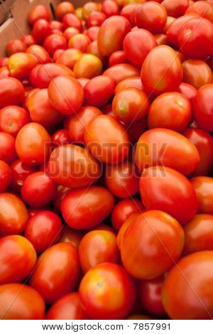 Organic Red Tomatoes