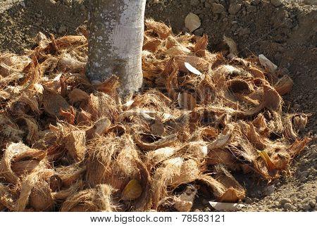 coconut coir texture as fertiliser in garden