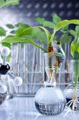 Science and plants in laboratory. genetic modifications on seedlings poster