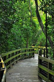 boardwalk rain forest