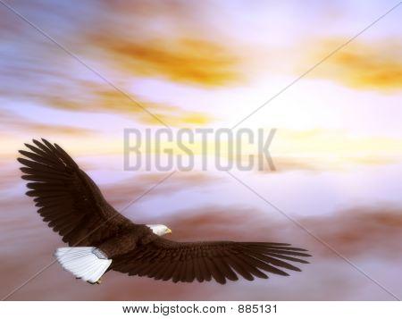 Eagleflying5
