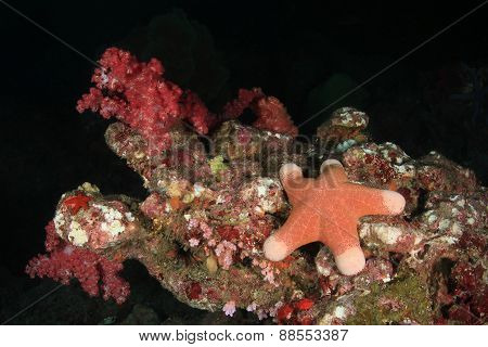Starfish Under Water On Bottom Of Andaman Sea, Thailand