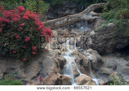 Flowers and waterfall in indoor garden