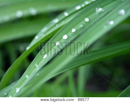 Drops Of Water On Leaves1