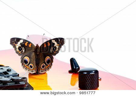 Buckeye Butterfly On A Guitar