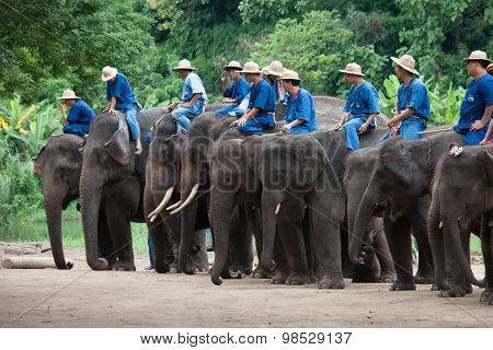 Daily Elephant Show At The Thai Elephant Conservation Center (te