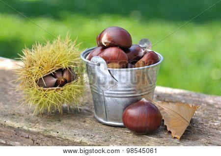 Chestnuts In Bucket