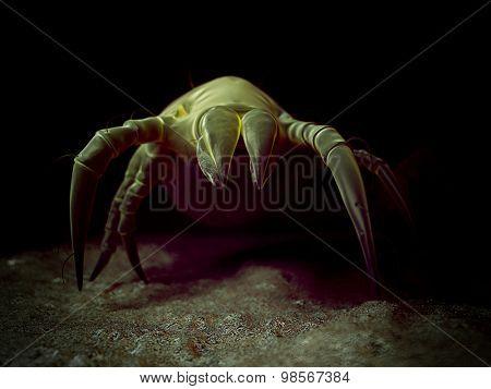 scientific illustration of a common dust mite