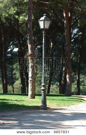 Street Lamp in Park