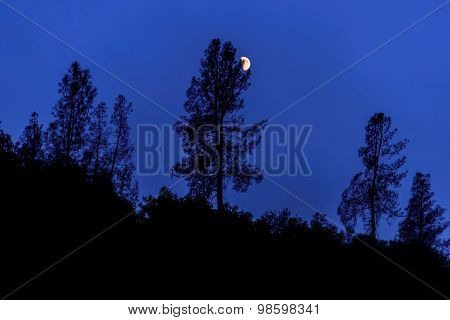 Silhouettes of trees and the moon at night