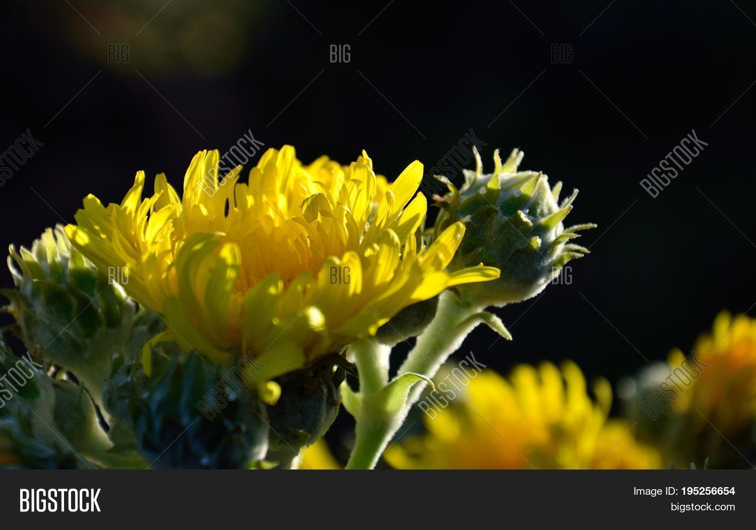 Bright Yellow Flowers Image Photo Free Trial Bigstock