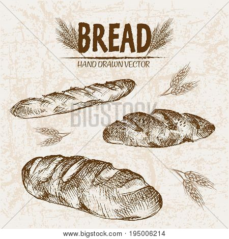 Digital vector detailed line art baked bread and dried wheat hand drawn retro illustration collection set. Thin artistic pencil outline. Vintage ink flat, engraved mill doodle sketches. Isolated