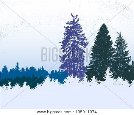 Winter snowy panoramic forest landscape with frozen conifers. Blue white and green wild landscape with flying snow and silhouettes of trees
