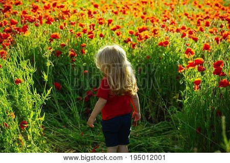 poppy and kid. child with long blonde hair in red shirt in flower field on natural background summer spring childhood and happiness opium ecology and environment