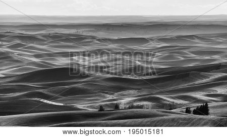 Black and White Palouse from Steptoe Butte