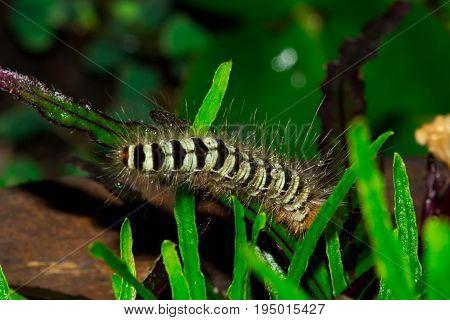 Hairy caterpillar animal wildlife bug insect nature