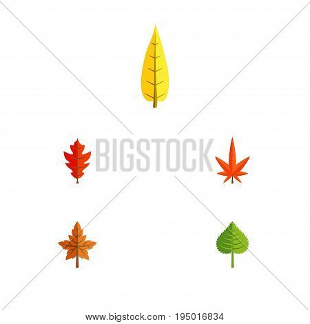 Flat Icon Maple Set Of Hickory, Frond, Alder And Other Vector Objects. Also Includes Foliage, Aspen, Hickory Elements.