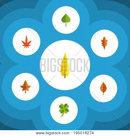 Flat Icon Maple Set Of Alder, Leafage, Aspen And Other Vector Objects. Also Includes Hickory, Aspen, Frond Elements.