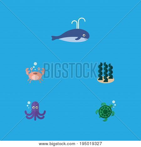 Flat Icon Marine Set Of Tentacle, Tortoise, Alga And Other Vector Objects. Also Includes Whale, Sea, Squid Elements.