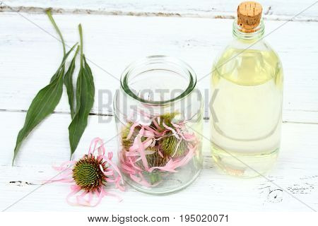 Making tincture from flower heads of narrow leaf purple coneflower Echinacea angustifolia Alternative medicine the best from all the Echinacea family