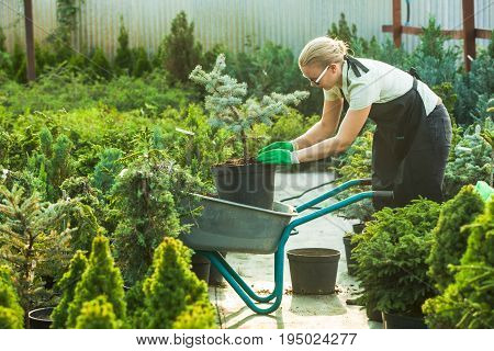 Young woman-gardener transplanting a plant in fertile soil