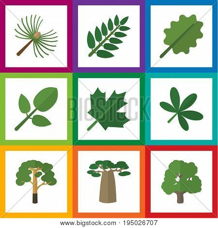 Flat Icon Bio Set Of Rosemary, Foliage, Oaken And Other Vector Objects. Also Includes Acacia, Hickory, Spruce Elements.