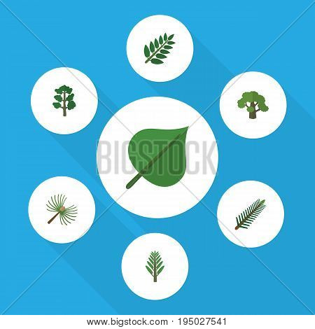 Flat Icon Natural Set Of Acacia Leaf, Tree, Spruce Leaves And Other Vector Objects. Also Includes Oak, Willow, Spruce Elements.